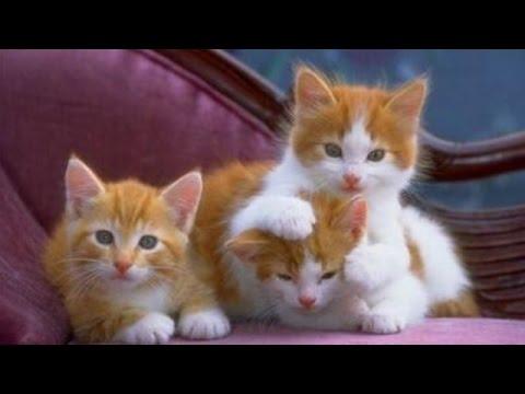 انواع الحيوانات الاليفة 10التي يمكن اصطحابها في المنزل thumbnail