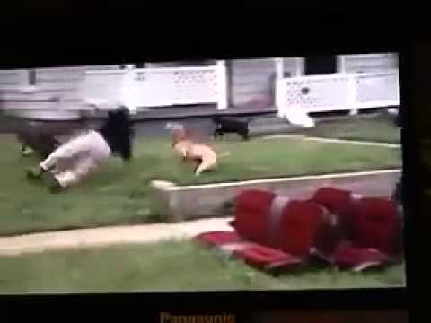 PITBULL ATTACKS ANIMAL CONTROL OFFICER SHOOTS