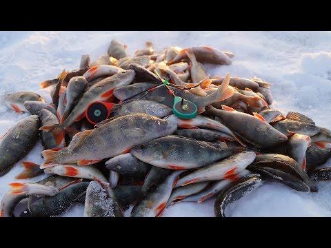 Сайт Ульяновских Рыбаков — Сайт и форум о рыбалке в