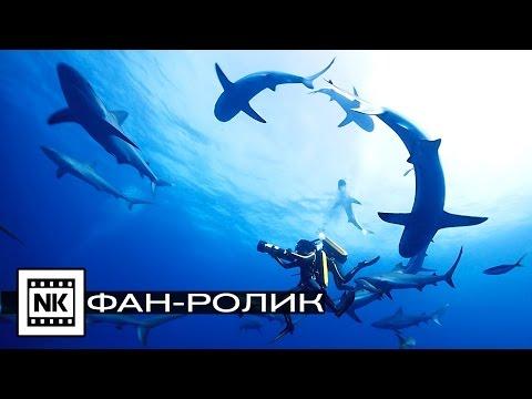 Видео Русские фильмы приключения 2017 года новинки смотреть онлайн бесплатно