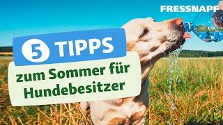5 Tipps zum Sommer für Hundebesitzer
