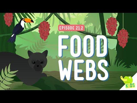 food-webs:-crash-course-kids-#21.2