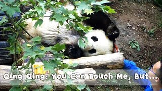 Qing Qing: You Can Touch Me Only If You Had Snack For Me | iPanda