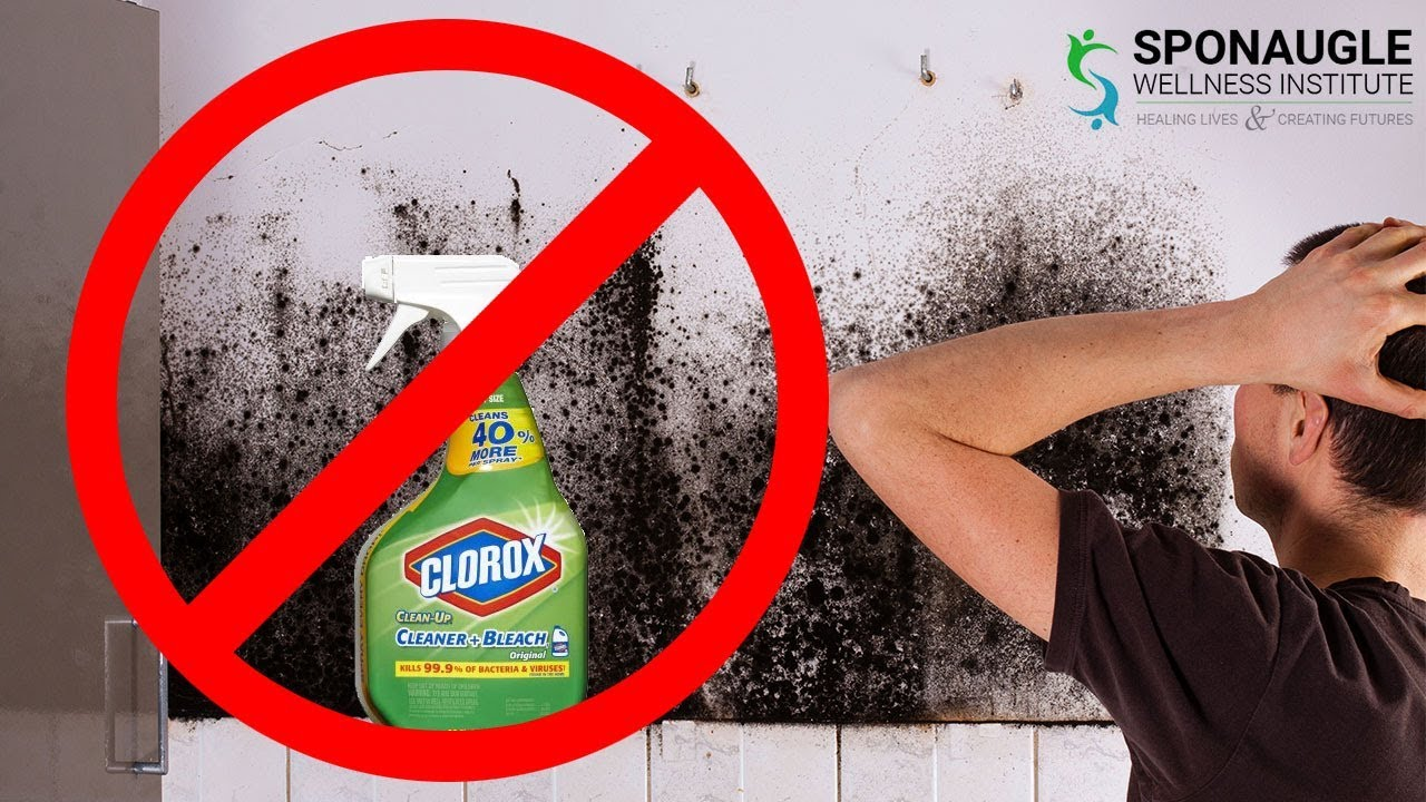 Dont Use Bleach Black Mold Safely