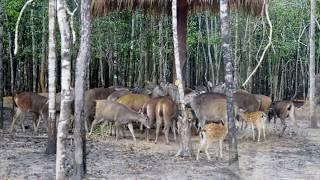 Cuộc sống Tây Nguyên Gia Lai: Động vật bảo tồn Việt Nam -  Động vật quý hiếm Việt Nam