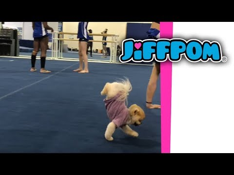 Jiffpom Doing a Handstand | Musical.ly