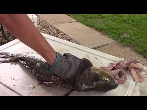 How to Clean a Carp
