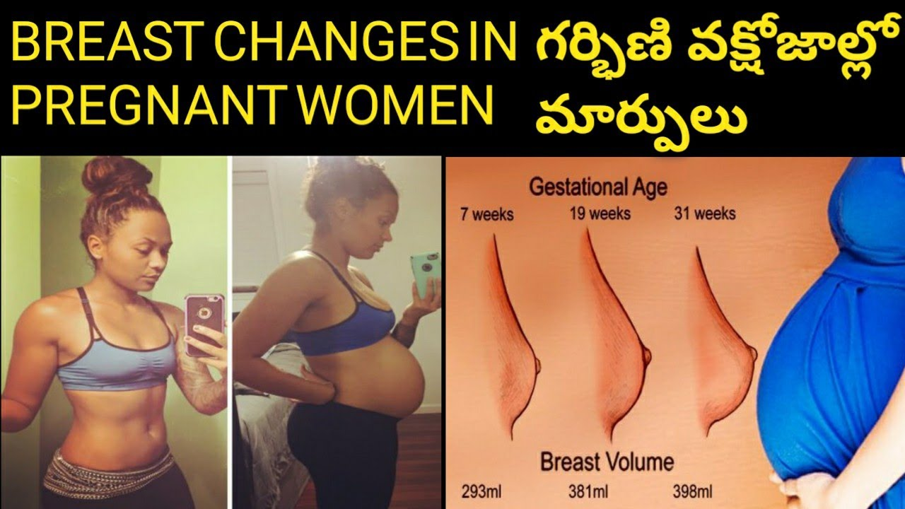 Breast Changes During Pregnancy In Telugu Breast Growth N -6074