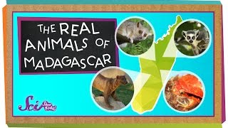 The Real Animals Of Madagascar
