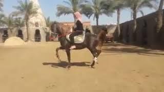 المعلمه عفاف إبراهيم البربري