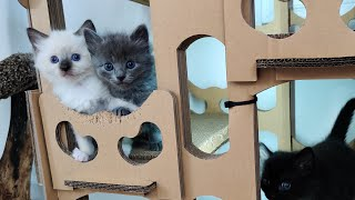 Kittens in the big room 20201019
