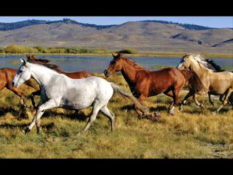 Pam Tillis - Let that pony run