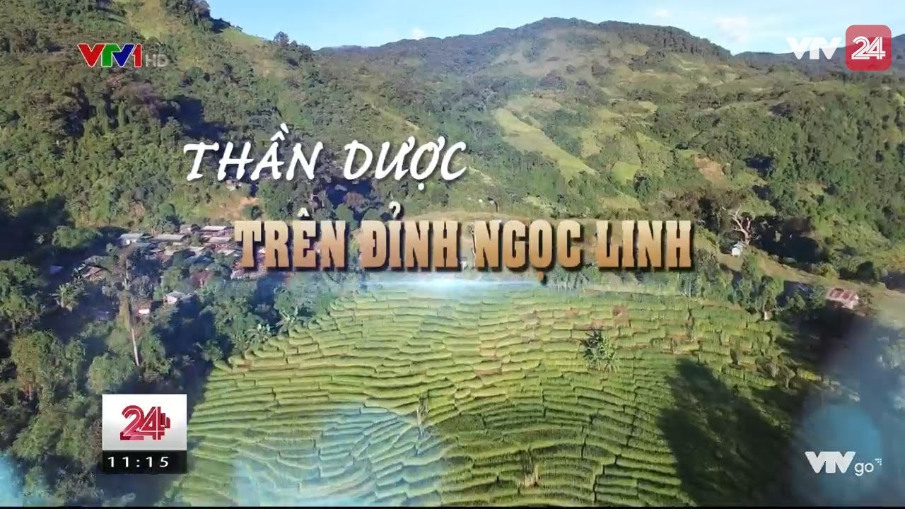 Tiêu Điểm:Thần Dược Trên Đỉnh Ngọc Linh  - Tin Tức VTV24