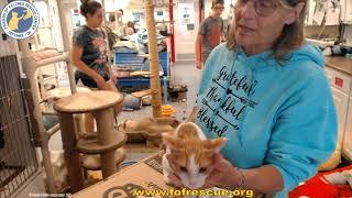 Adoption of Rupert 07-30-2021. Friends of Felines Rescue Center (FFRC)