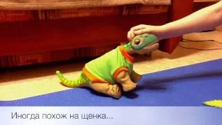 Интерактивный динозавр PLEO RB(Интерактивный динозавр PLEO RB подробнее http://kolobok.dp.ua/catalog/igrushki/interaktivnie-igrushki/interaktivnij-dinozavr-pleo-rb., 2012-10-26T14:09:43.000Z)