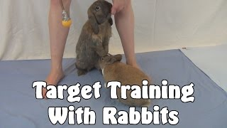 Clicker Training: Target Training With Rabbits