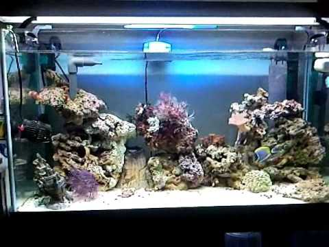 Nano reef acquario dodi roma 120 litri youtube for Acquario 120 litri