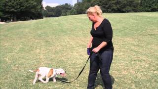 Tips And Tricks: Loose Leash Walking