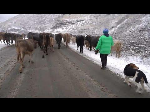 Карабахские армяне уезжают
