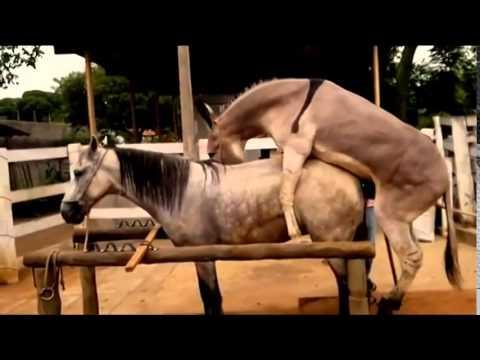 ngựa và lừa@@adc