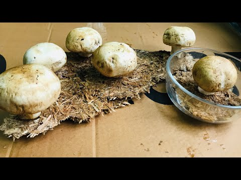 СУПЕР способ выращивания грибов на столе!!! шутка