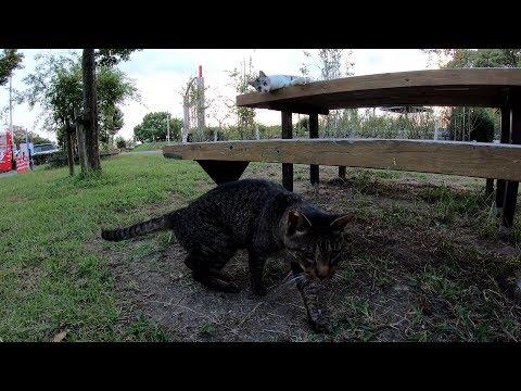 可愛い新入り猫をモフっていると、強面のボス猫も寄ってきた