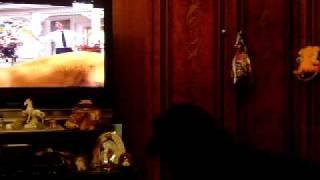 собака смотрит телевизор про нармадюка