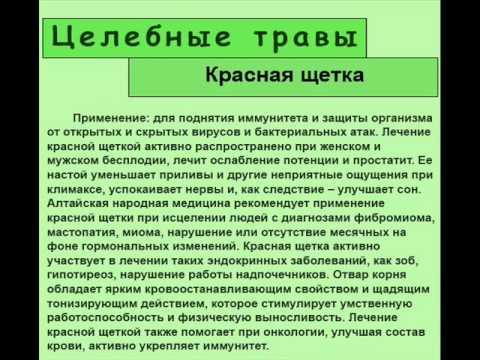 Купить боровую матку и красную щетку можно у нас по цене от 120 рублей за 10 грамм. Читайте о применении боровой матки и красной щетки.