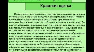 Красная щетка(http://travmag.ru/item/krasnaya-shhetka.html купить целебные травы в нашем интернет магазине трав., 2014-03-21T15:55:46.000Z)