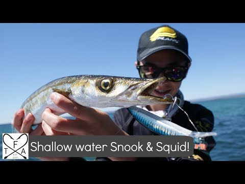 Shallow Water Snook And Squid MADNESS! | St Kilda, South Australia