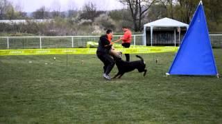 Rottweiler Novella Futogline Ztp Test