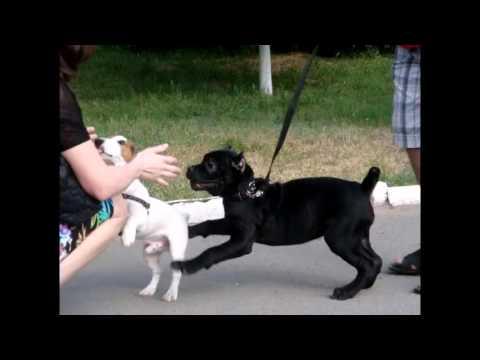Видео щенков ЧИХУАХУА.aviиз YouTube · Длительность: 5 мин50 с  · Просмотры: более 115000 · отправлено: 28.11.2011 · кем отправлено: minidog11000