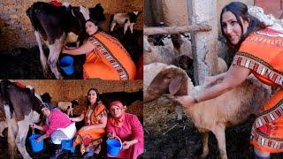 حلبت البقرة والنعجة 😂 سطاج في البادية مع سارة المدينية