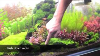 Tom Barr Explains Planted Tank Maintenance