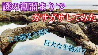 【ガサガサ】謎の潮溜まりでガサガサして巨大生物を捕獲!! thumbnail