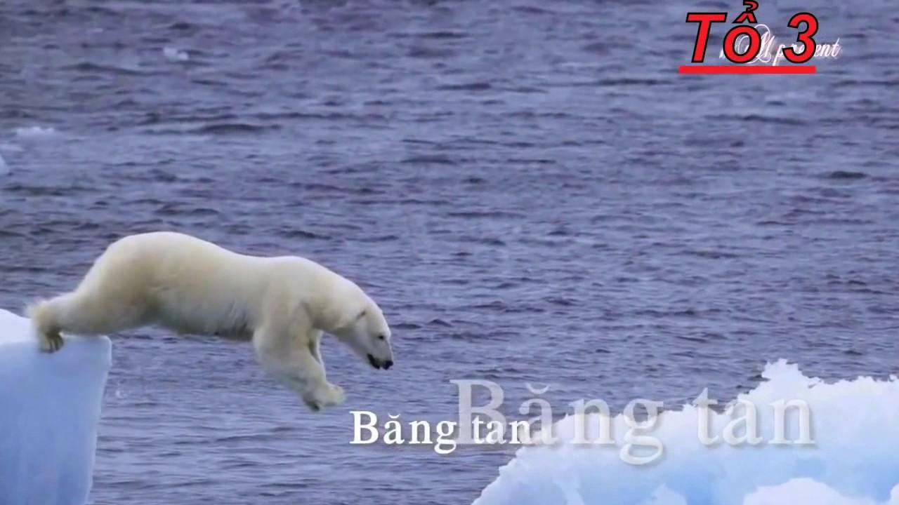 hậu quả ô nhiễm môi trường