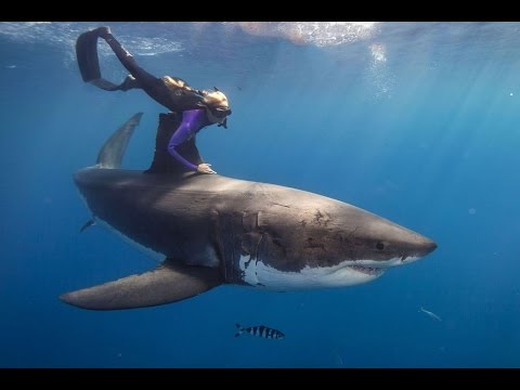 Ocean Ramsey diving with sharks