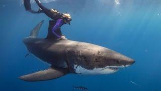 Indigiofrau (?) schwimmt mit weissem Hai