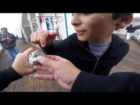 Malibu Pier Fishing FUN FUN FUN !!!!!!!!!!!! Dec 2016