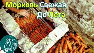 Как хранить морковь в погребе в песке по технологии Гордеевых