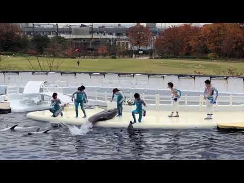 Our trip to Kyoto Aquarium
