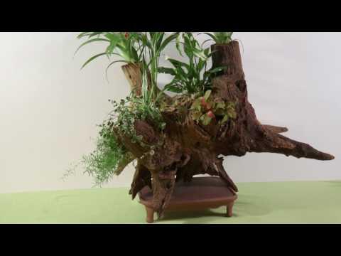 comment d vitaliser naturellement des souches d 39 arbre doovi. Black Bedroom Furniture Sets. Home Design Ideas