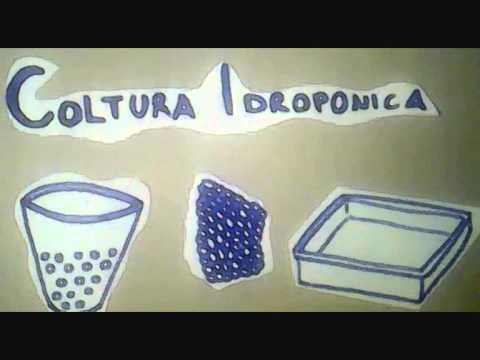 Coltivazione idroponica e aeroponica doovi - Coltivazione idroponica in casa ...