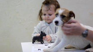 ВЛОГ Клеим бумажную собачку Французского бульдога VLOG Glued from paper dog French Bulldog