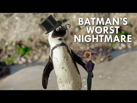 The African Penguin is Batman's Cutest Villain