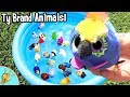 Learn TY BRAND ANIMALS! Mini Blue Pool with Animal Names with Squishee Nugget