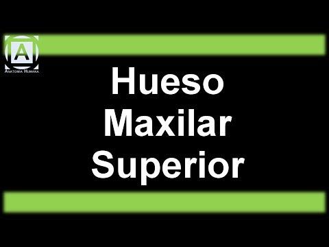 Hueso Maxilar Superior - YouTube