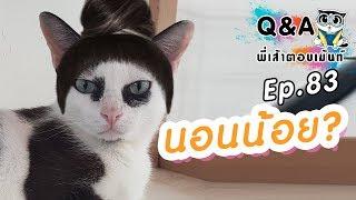 ทำไมแมวขอบตาดำ?
