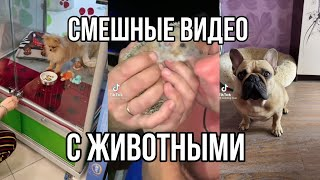 Смешные Видео С Животными Funny Videos With Animals Katya Dushkevich