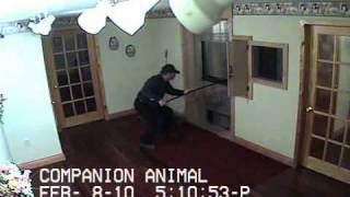 Companion Animal Cremation Service